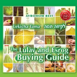 Lekicha Tama – The Lulav and Esrog buying guide